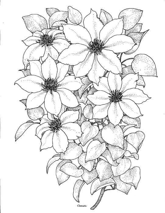 Картинки красивых цветов для срисовки, днем рождения месяцам