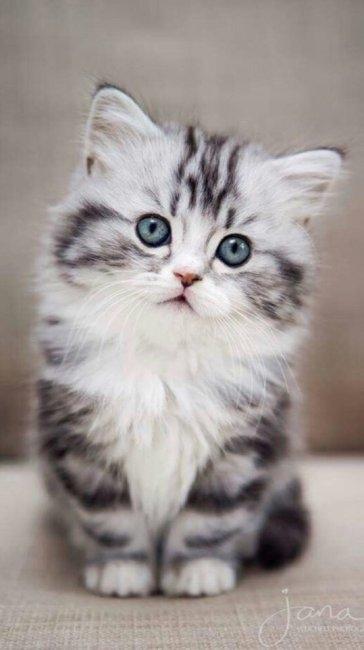 Красивые котята картинки на телефон 001
