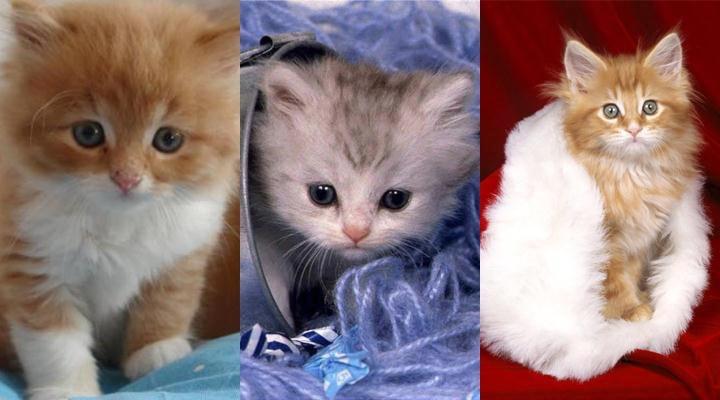 Красивые котята картинки на телефон 003