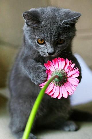 Красивые котята картинки на телефон 004