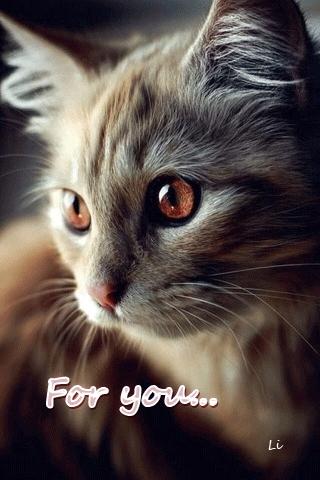 Красивые котята картинки на телефон 005