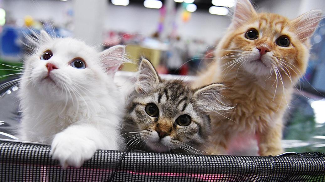 Красивые котята картинки на телефон 006