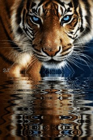 Красивые котята картинки на телефон 007
