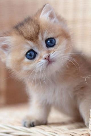 Красивые котята картинки на телефон 008