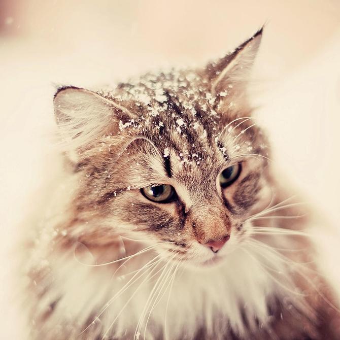 Красивые котята картинки на телефон 009
