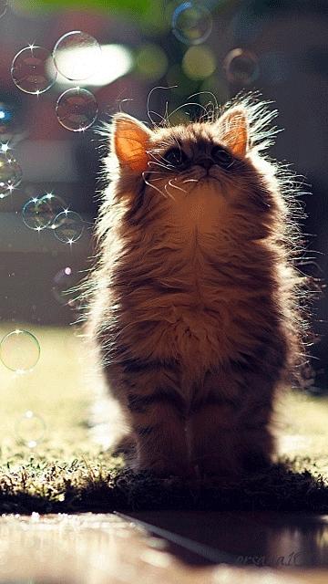 Красивые котята картинки на телефон 012