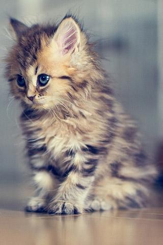 Красивые котята картинки на телефон 013