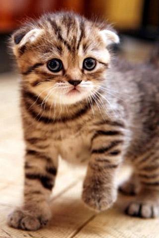 Красивые котята картинки на телефон 015
