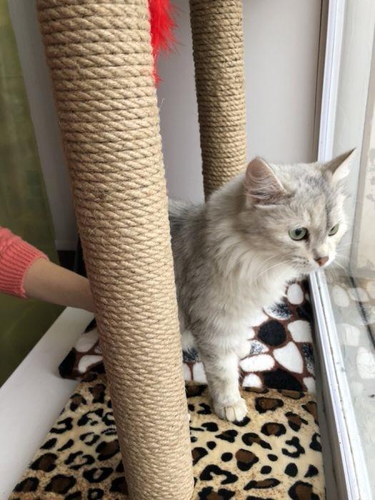 Красивые котята картинки на телефон 016