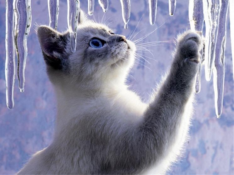 Красивые котята картинки на телефон 018