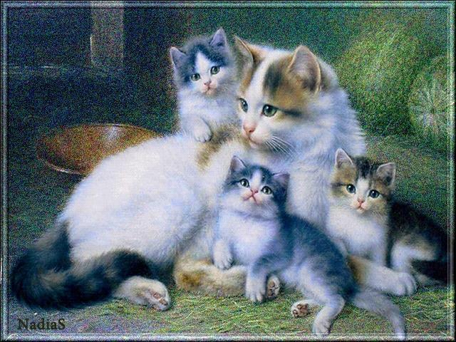 Красивые котята картинки на телефон 019