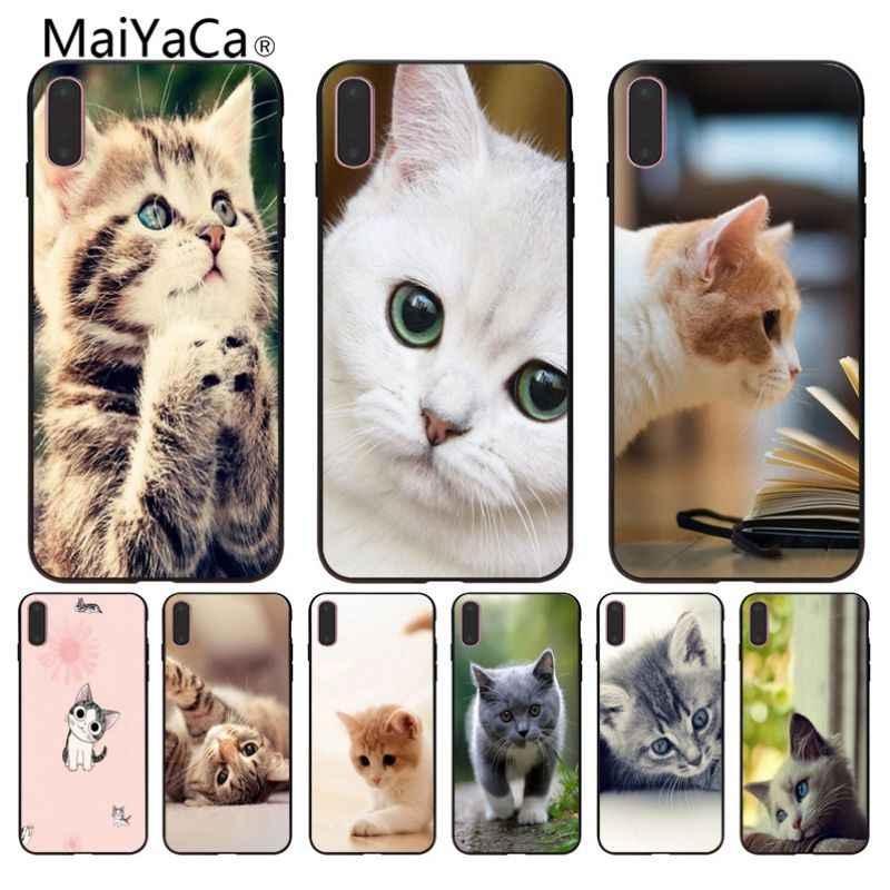 Красивые котята картинки на телефон 020