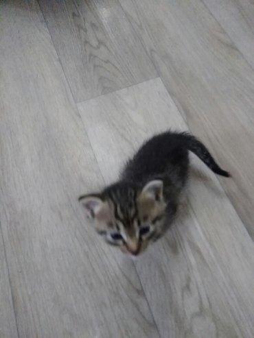 Красивые котята картинки на телефон 021