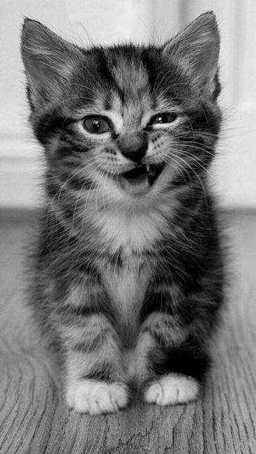 Красивые котята картинки на телефон 023