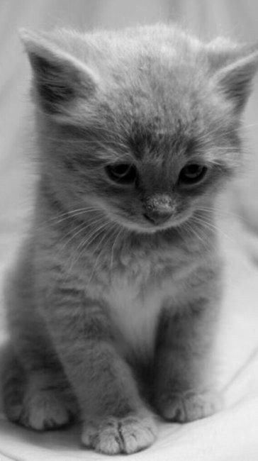 Красивые котята картинки на телефон 025