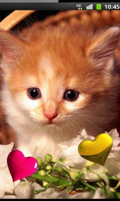 Красивые котята картинки на телефон 026