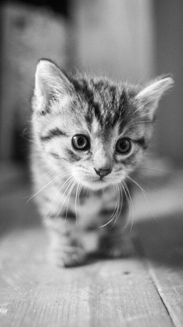 Красивые котята картинки на телефон 027