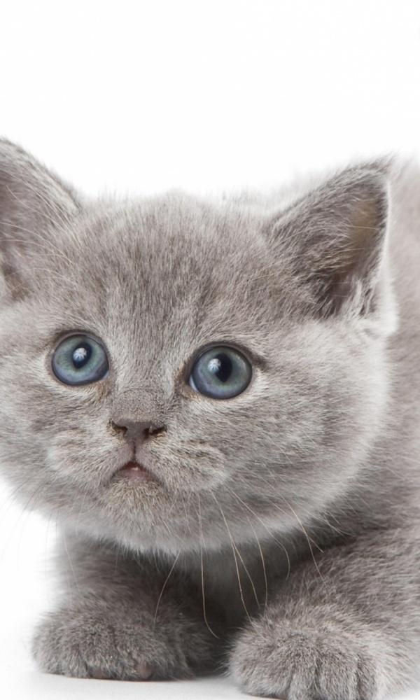 Красивые котята картинки на телефон 028