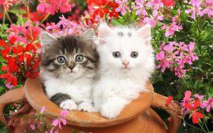 Красивые котята картинки на телефон002