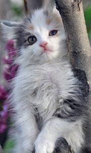 Красивые кошки скачать фото   подборка024