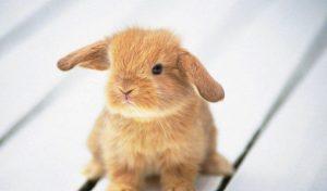 Красивые кролики и зайцы фото028