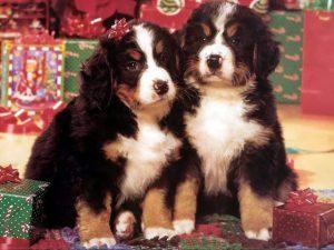 Красивые новогодние картинки с собачками027