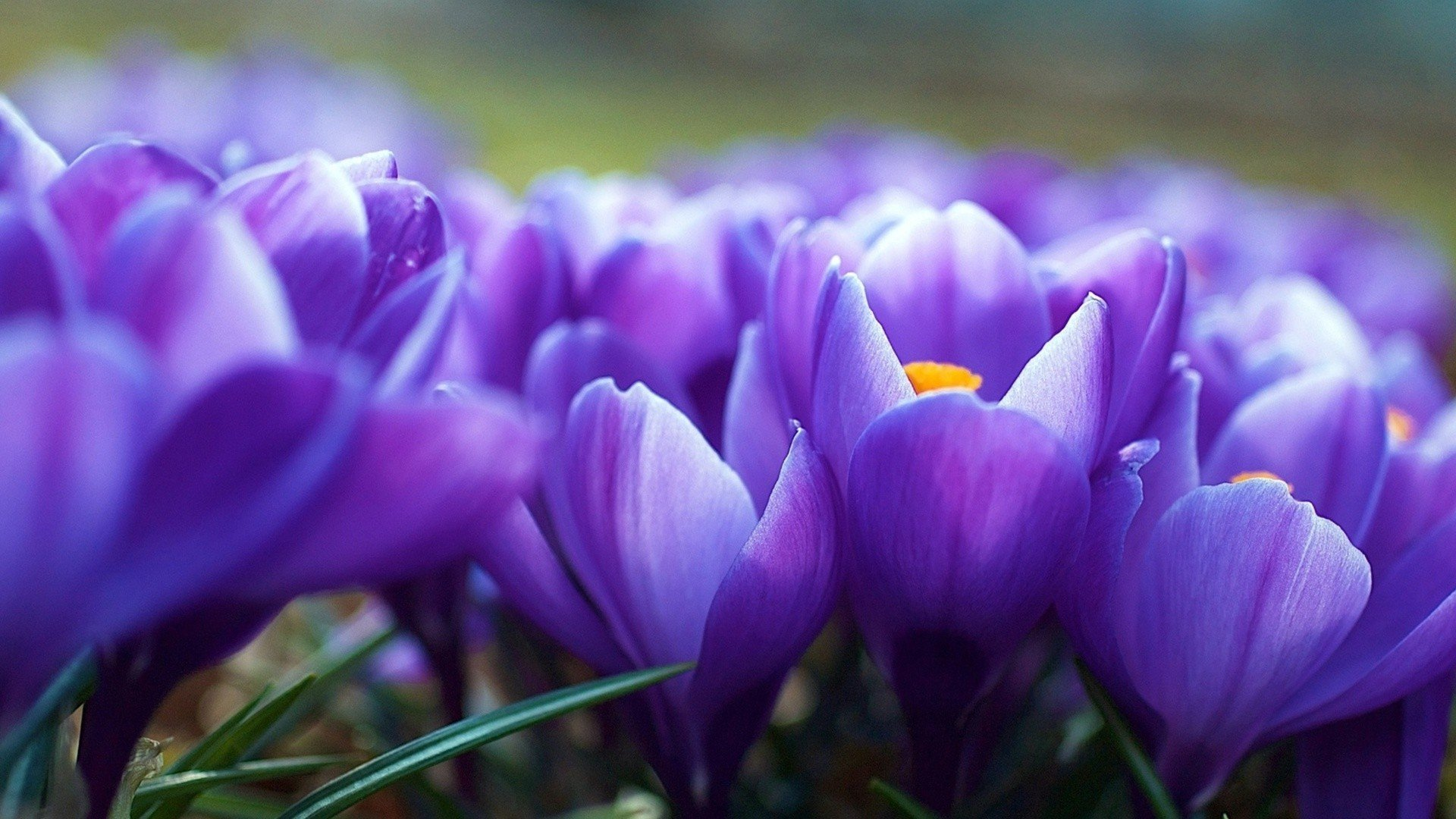 Фото для обоев на рабочий стол весна
