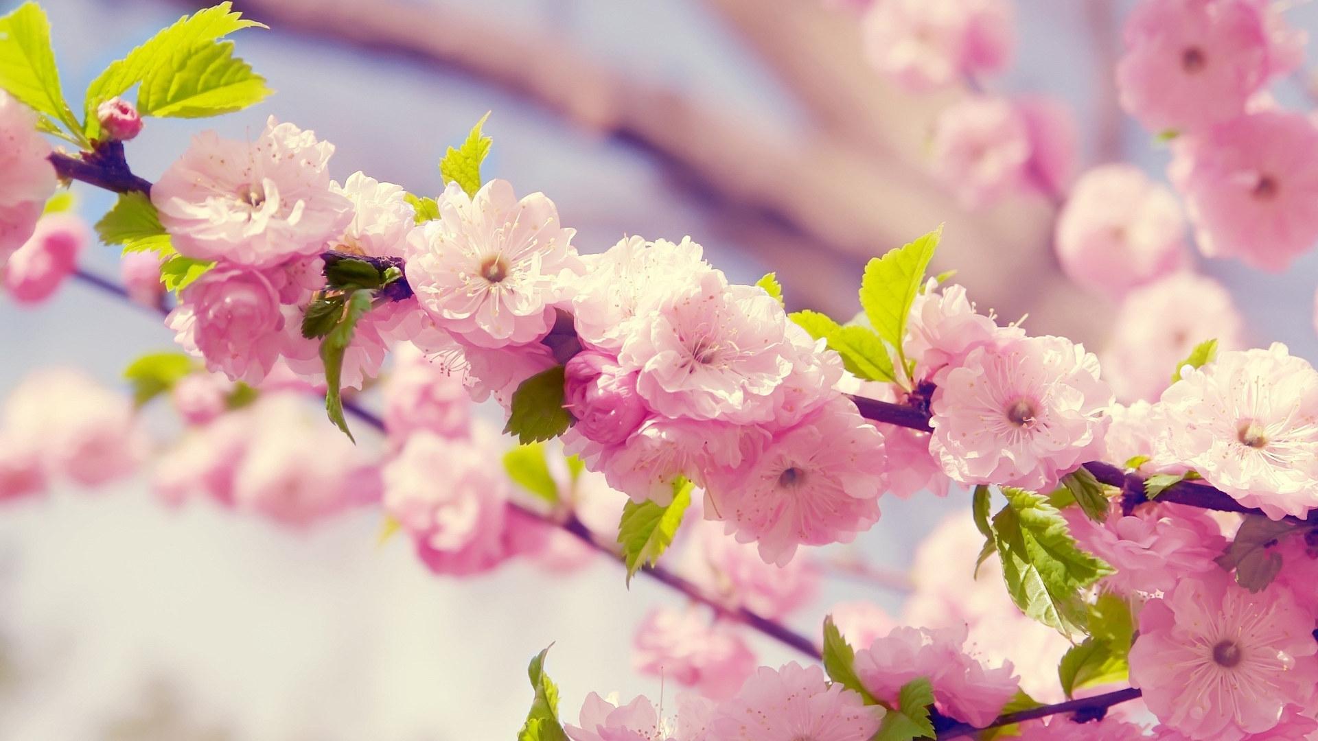 Красивые обои на рабочий стол осенние цветы   скачать (16)