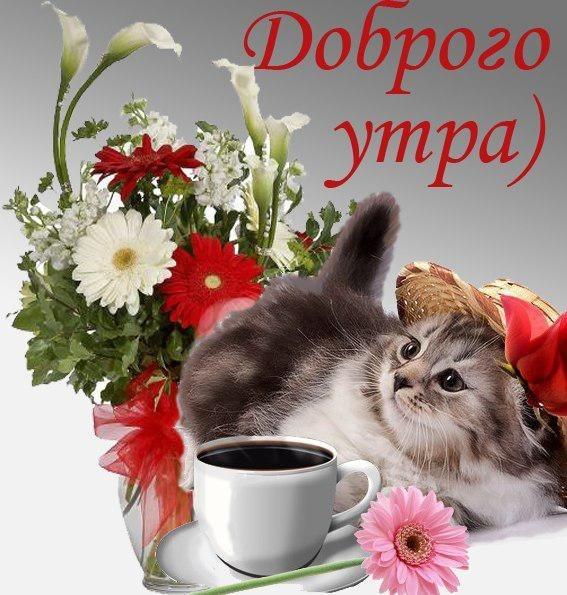 Автомобилиста, открытки доброе утро с животными