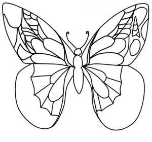 Красивые рисунки для срисовки бабочки 028