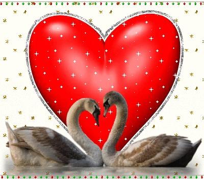 Красивые фото двух влюбленных лебедей 007