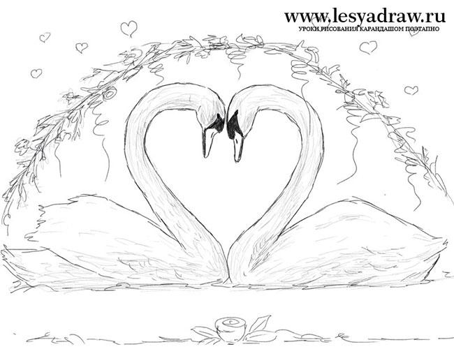 Красивые фото двух влюбленных лебедей 021