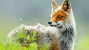 Красивые фото диких зверей   подборка 023