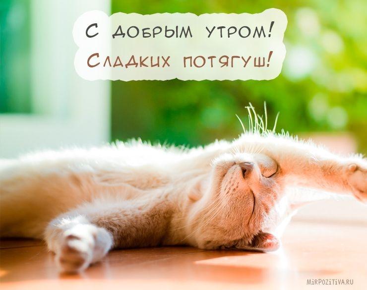 Красивые фото доброе утро котик   подборка 028