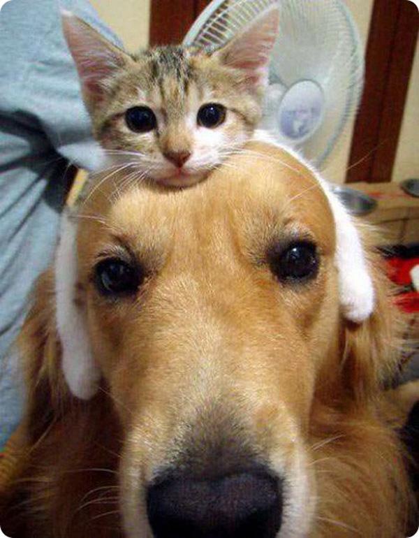 Прикольные картинки котов или собака, котенок