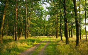 Красивые фото леса на рабочий стол (15)