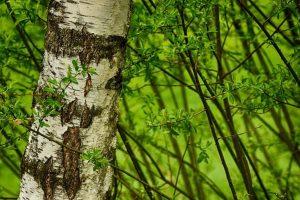 Красивые фото лес, река и природа   подборка 026