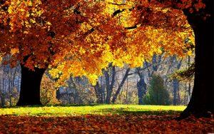 Красивые фото осень в красках   подборка025