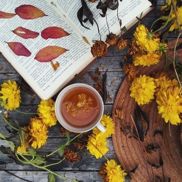 Красивые фото осень, кофе, плед   сборка 009