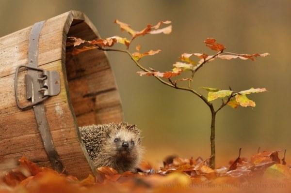 Красивые фото осень, кофе, плед   сборка 013