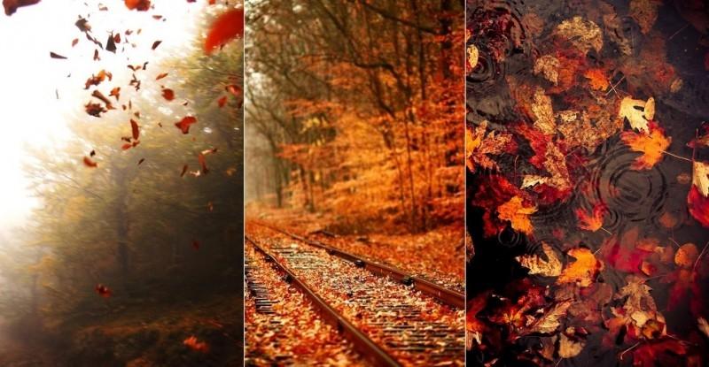 Красивые фото осень, кофе, плед   сборка 014