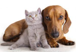 Красивые фото собаки с кошками 023