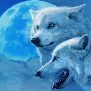 Красивые фото человека и волка027
