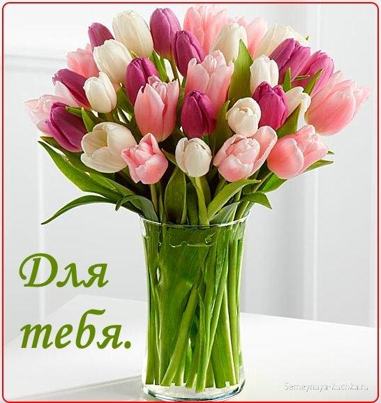 Красивые цветы любовь картинки и открытки003