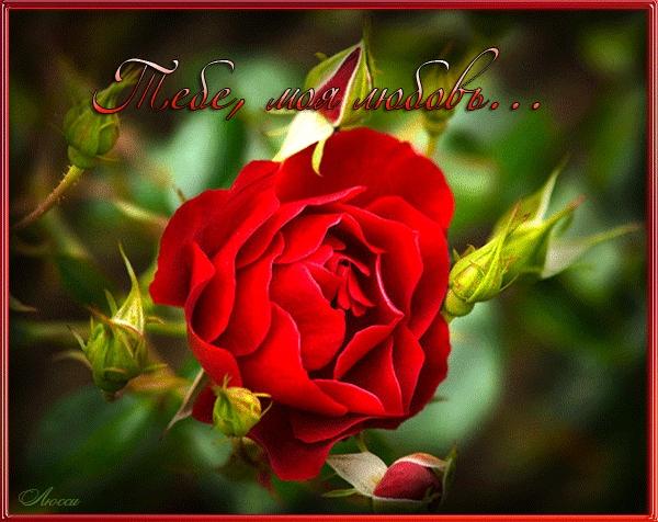 Красивые цветы любовь картинки и открытки004