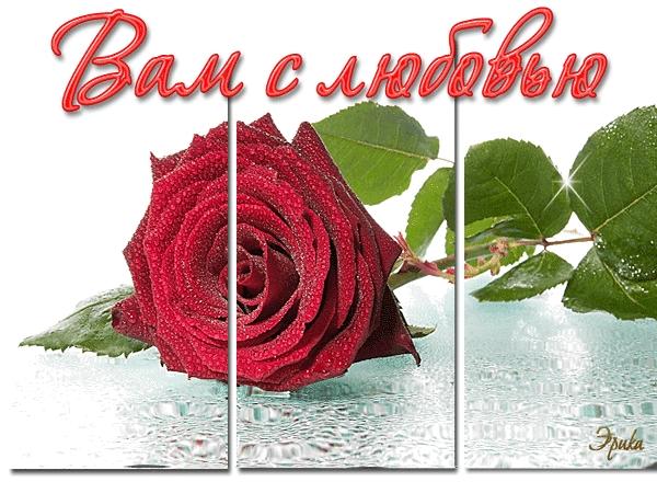 Красивые цветы любовь картинки и открытки008