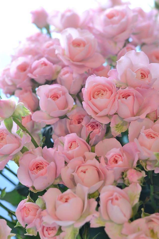 Красивые цветы любовь картинки и открытки011