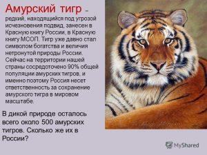 Красная книга фото амурский тигр 023