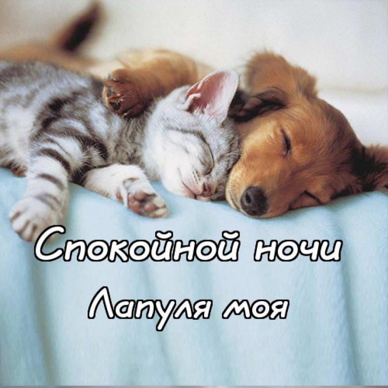 Одевайся, спокойной ночи милая моя картинки