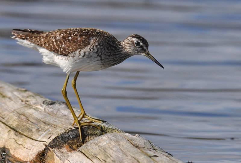 птицы перми название и фото